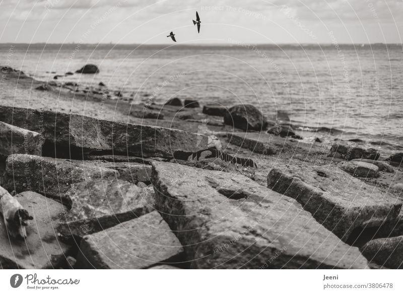 Am Strand liegen zerbrochene Platten aus Beton und die Schwalben fliegen in der Luft Meer Ostsee Ostseeküste Küste Stein Steine Wasser Steilküste Fels