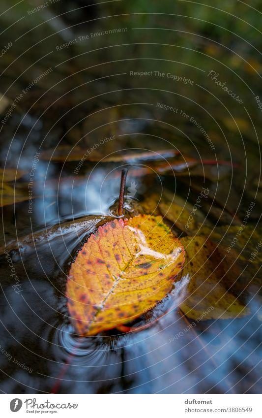 Herbstblatt im Wasser Laub verwelkt orange Hintergrund herabfallen herbstlich Herbstlaub Herbstfärbung Natur Blatt Herbstwald Farbfoto Pflanze Herbstbeginn