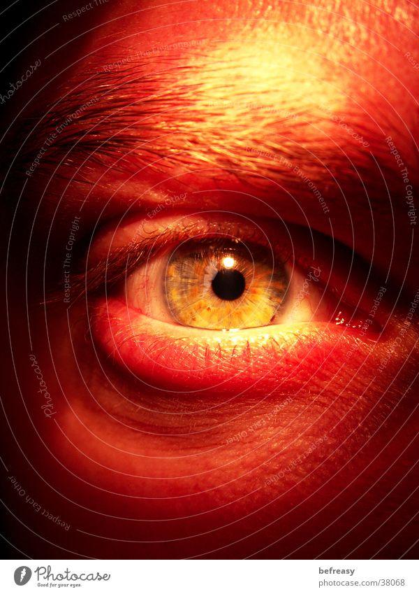 aggressiver Blick Aggression durchdringend Wut Pupille Augenbraue Wimpern Härchen Mann Regenbogenhaut aufreißen
