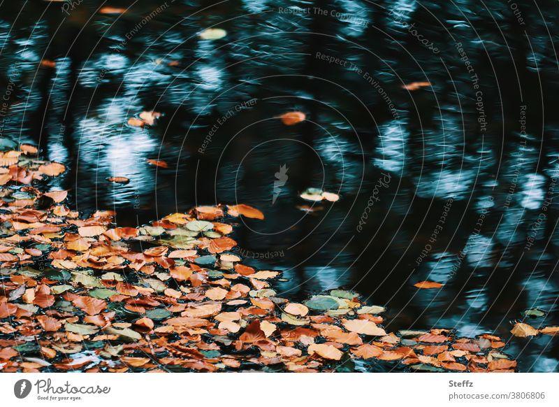 schon wieder Herbst in unserem Leben Herbstgefühle Herbststimmung Herbstfärbung Herbstlandschaft Herbstwetter Herbsttag Herbstlaub herbstlich