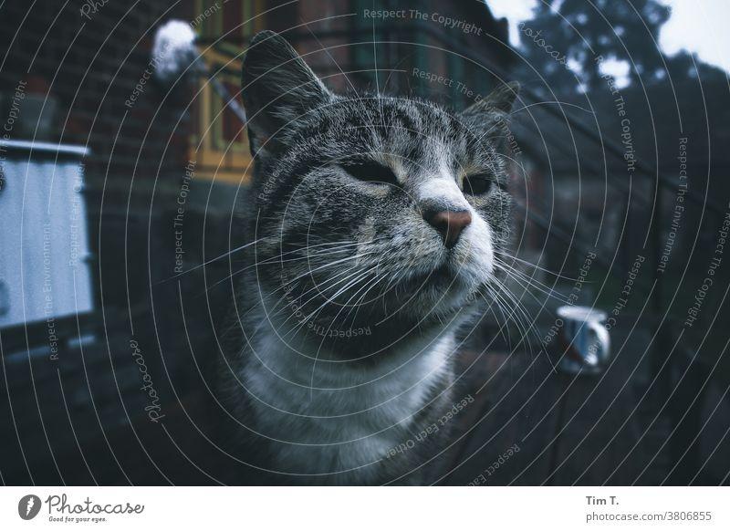 Chefkatze Polen polska Katze Bauernhof Tier Außenaufnahme Farbfoto Haustier Tierporträt 1 Tag Menschenleer Blick beobachten Blick nach vorn