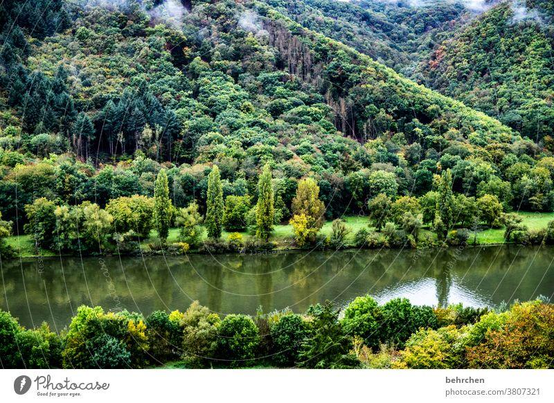 moseldschungel Ferien & Urlaub & Reisen Wald Außenaufnahme wandern Natur Landschaft Menschenleer Farbfoto Wolken Berge u. Gebirge Umwelt Ferne Freiheit