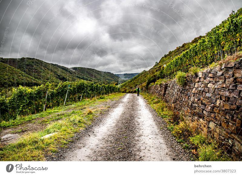 lasse weit weg herbstlich Rheinland-Pfalz Flussufer Jahreszeiten Herbst Berge u. Gebirge Mosel (Weinbaugebiet) Moseltal Hunsrück Kindheit Weinberg Ruhe Idylle