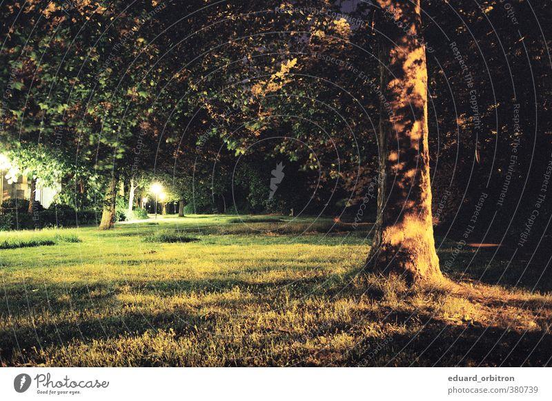 Nightdivers Umwelt Natur Baum Gras Bremen dunkel Einsamkeit Straßenbeleuchtung Schattenspiel Farbfoto Gedeckte Farben Außenaufnahme Menschenleer Nacht