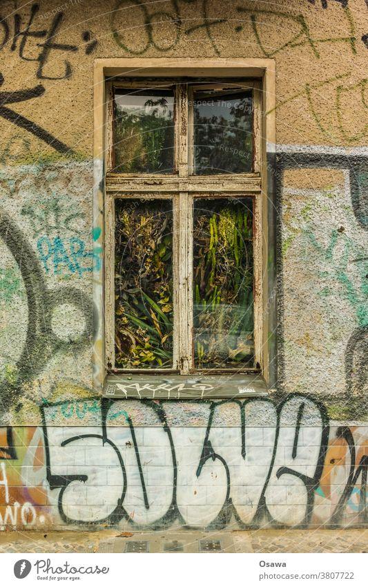 Altbaufenster mit Flora Fenster Pflanzen Kakteen Kaktus Zimmerpflanzen Grünpflanze grün Blume Sukkulenten Botanik Gebäude Wohnhaus Glas Wintergarten Gewächshaus