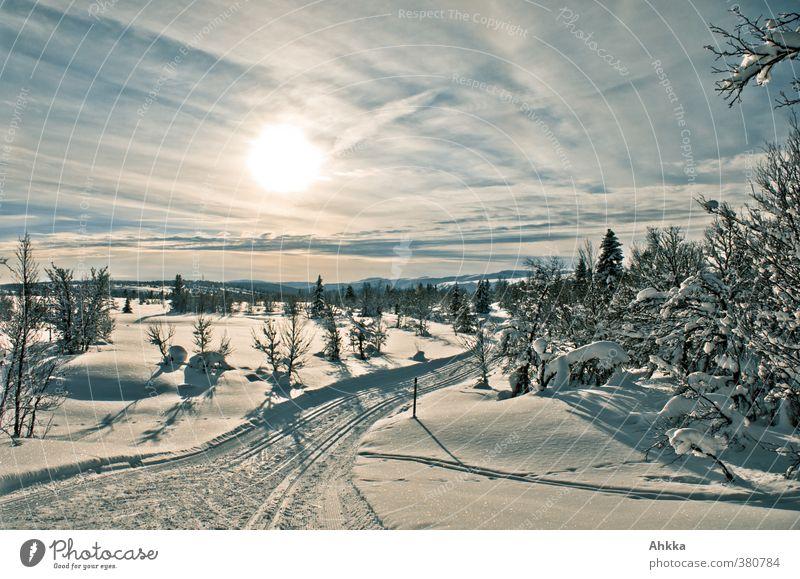 Märchenlandschaft in Skandinavien, Schnee, Sonne, Skispur Natur Ferien & Urlaub & Reisen Baum Einsamkeit Landschaft Ferne Winter kalt Berge u. Gebirge Bewegung