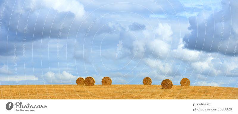Strohballen Getreide Sommer Landwirtschaft Forstwirtschaft Natur Landschaft Pflanze Wolken Herbst Wärme Feld rund blau gelb Rolle Strohrolle Heu Kornfeld Gerste
