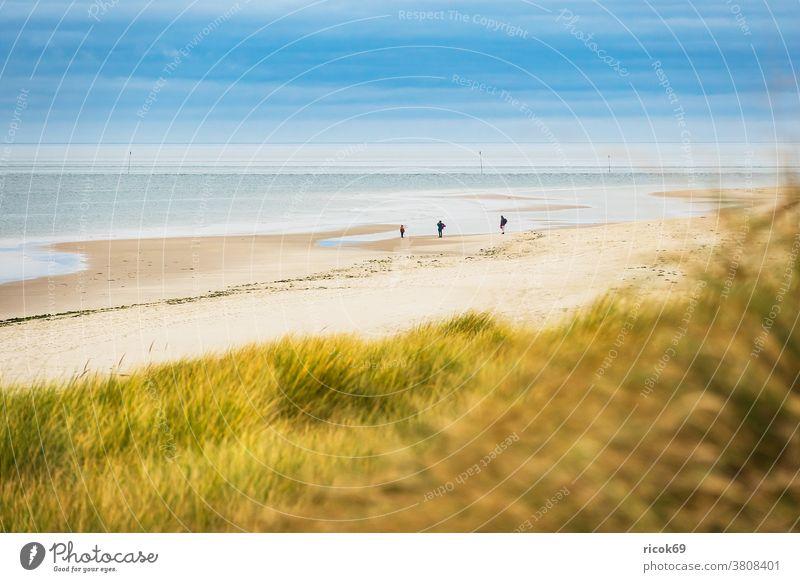 Landschaft mit Dünen auf der Insel Amrum Küste Strand Nordfriesische Insel Nordsee Meer Nordseeküste Menschen Spaziergänger Reiseziel Schleswig-Holstein Urlaub