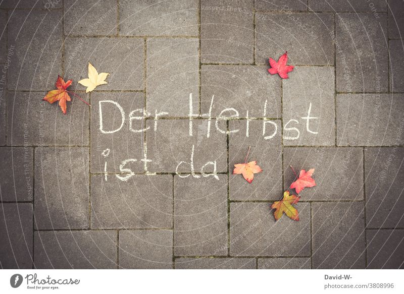 Der Herbst ist da Herbstbeginn Laub Herbstlaub Ankündigung Satz Herbstfärbung herbstlich Blätter Jahreszeit