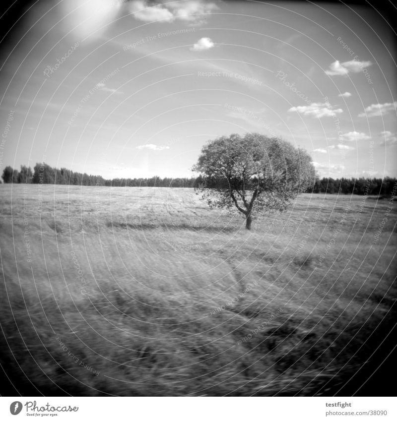 holga lo-fi Natur weiß Baum schwarz Landschaft Amerika Holga Portugal