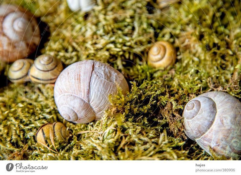 Schneckenhaus ruhig Meditation Dekoration & Verzierung Natur Moos Tier Wildtier einfach grau schnecke schnecken Spirale sammeln sammlung still Stillleben