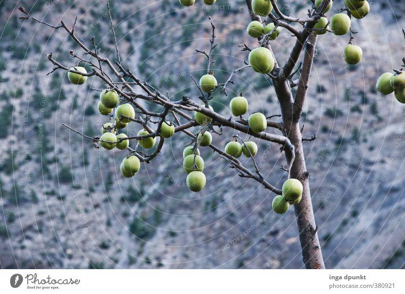 Erntezeit Umwelt Natur Landschaft Pflanze Herbst Baum Nutzpflanze Apfel Apfelbaum Frucht fruchtreife Landwirtschaft dunkel natürlich ruhig Abend Schatten