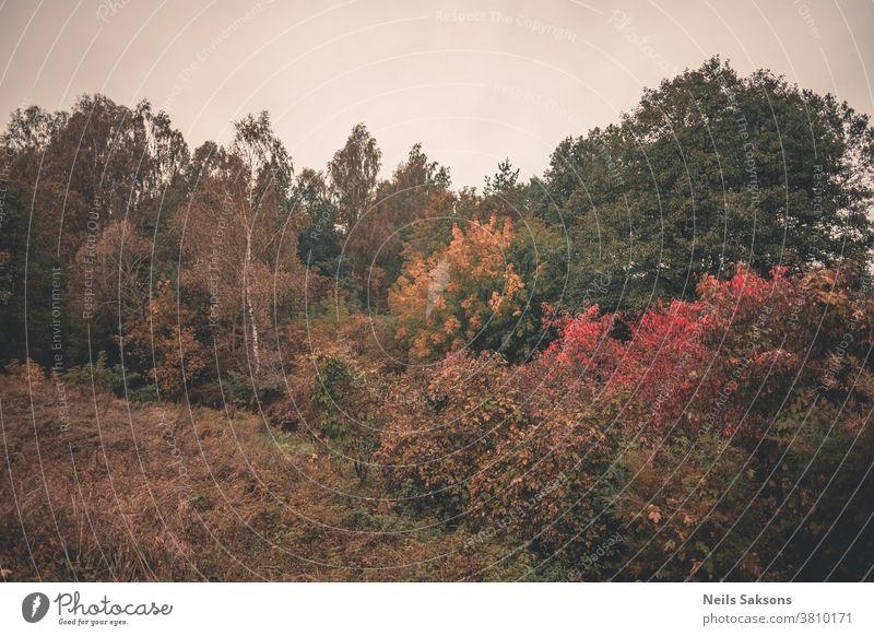 Herbstbäume am Abend Berge u. Gebirge Landschaft fallen rot Wald Natur Baum Saison bunt natürlich orange schön gelb blau Blatt Gras Laubwerk Licht Park Ambitus