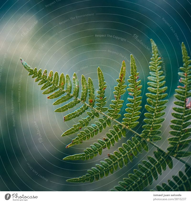 grünes Farnblatt in der Natur in der Herbstsaison, grüner Hintergrund Wurmfarn Pflanze Blatt Sonnenlicht hell abstrakt Textur Garten geblümt dekorativ im Freien