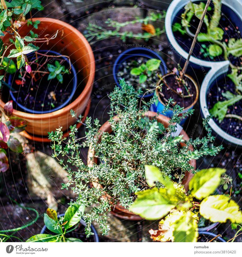 Im Garten, Blumen und Pflanzen in Töpfen Blüte pflanzen nachhaltig Blumentopf Lifestyle Farbfoto Freizeit & Hobby Außenaufnahme Nahaufnahme Natur Terrakotta