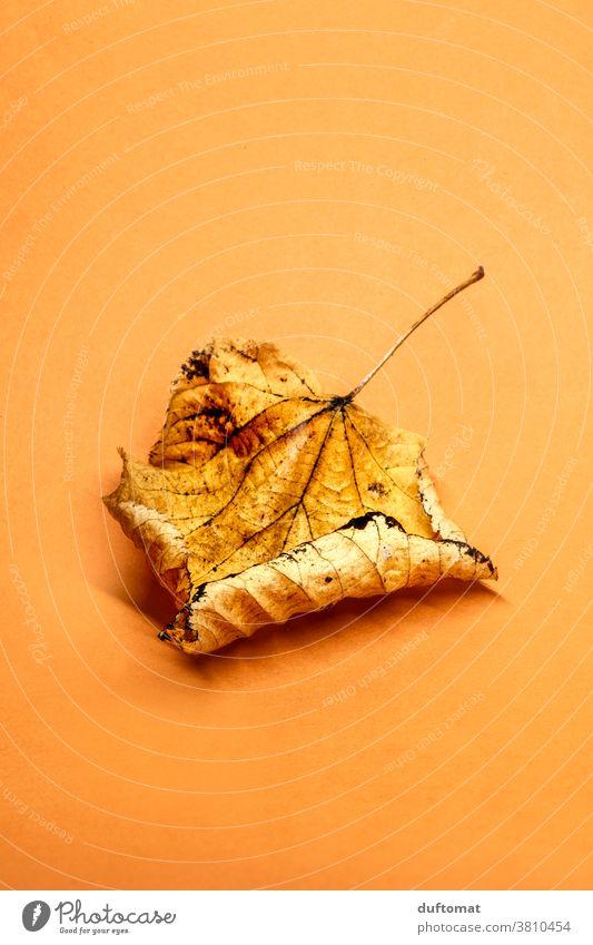 Herbstlaub auf orangem Untergrund Laub verwelkt Hintergrund flach liegen herabfallen herbstlich Herbstfärbung trocken vertrocknetes Blatt Natur Farbfoto Pflanze