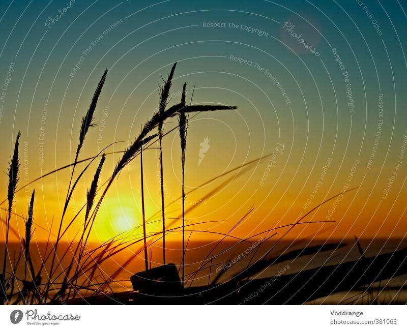 Sonnenuntergang über dem Meer schön ruhig Ferien & Urlaub & Reisen Abenteuer Sommer Strand Natur Landschaft Wasser Himmel Horizont Gras Küste Insel hell blau