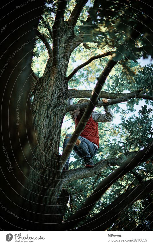 oben in des baumes spitze Baum Kind Klettern Spielen Kindheit toben Natur draußen Baumkrone Äste Mädchen Freude Fröhlichkeit Mut Höhenangst Bewegung Mensch