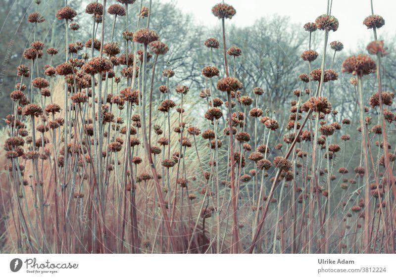 Garten im Winter Herbst Verblüht Licht Stengel Trauer Trauerkarte Vergänglichkeit Flora Natur Natürlich