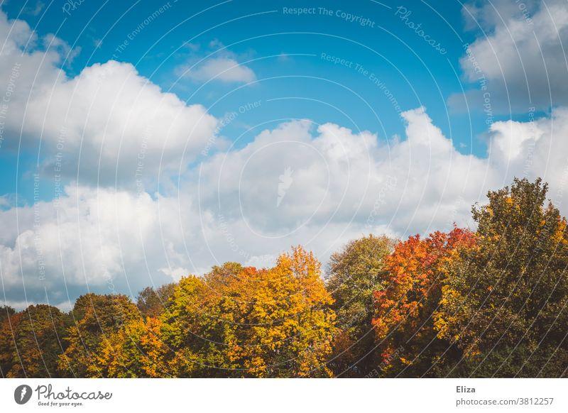 Herbstwald bei Sonnenschein mit Himmel Wald Bäume Laub Natur Außenaufnahme Baum Herbstlaub Landschaft Blauer Himmel Schönes Wetter bunt Jahreszeiten