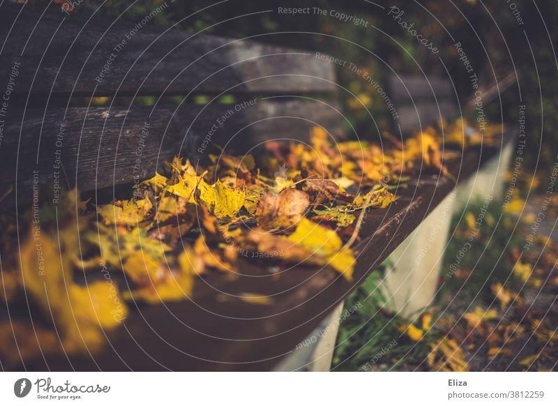 Eine mit Laub bedeckte Sitzbank im Park Bank laubbedeckt Herbst Herbstlaub Herbstfärbung Tag Blätter herbstlich Natur
