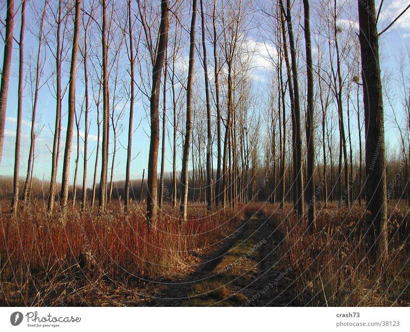 Wald Baum Kroatien blau Herbst Himmel slawonien Wege & Pfade Straße Sonne