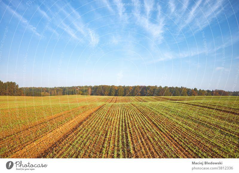 Herbstlandschaft mit landwirtschaftlichem Feld und einem Wald. Landschaft Saison Ackerbau Natur ländlich Pflanze Ernte grün Keimling malerisch Himmel Morgen