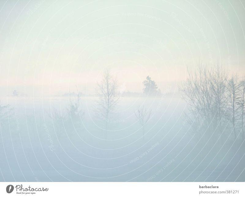 Ein Hauch von Winter Landschaft Luft Himmel Nebel Eis Frost Schnee Baum Sträucher Teich See hell kalt Stimmung ruhig Einsamkeit Idylle Natur Sinnesorgane