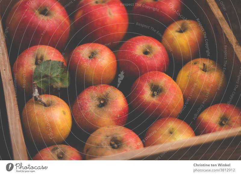 Reife rote Äpfel vom eigenen Baum liegen ordentlich sortiert in einer Holzkiste Apfel Frucht Natur eigene Ernte Bioprodukte Cox Orange Lebensmittel Ernährung