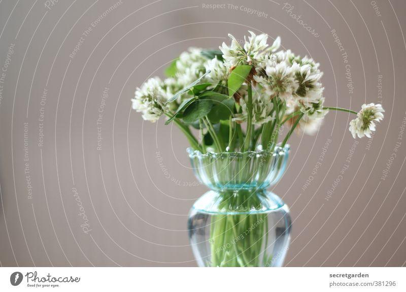 Happy Birthday Photocase schön grün Pflanze Blume Blüte braun Geburtstag Blumenstrauß Vase Grünpflanze minimalistisch