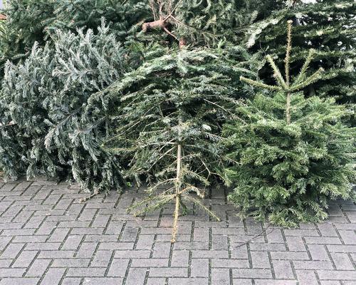 ausrangierte Weihnachtsbäume, die zur Müllabfuhr auf dem Bürgersteig gestapelt werden Weihnachtsbaum Tannenbaum wegwerfen Weihnachten Baum Sammlung Haufen