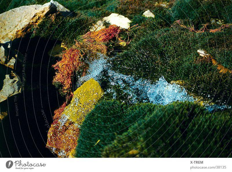 Bergquell Quelle Farbenspiel Wasser ursprünglich wasserspiel