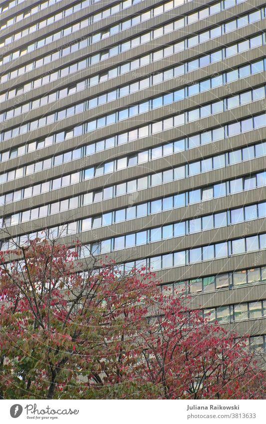 Hochhaus mit Bäumen Architektur Gebäude Stadt Fassade Außenaufnahme Fenster Farbfoto Wand Haus Stadtzentrum Hauptstadt Froschperspektive hoch Menschenleer Tag