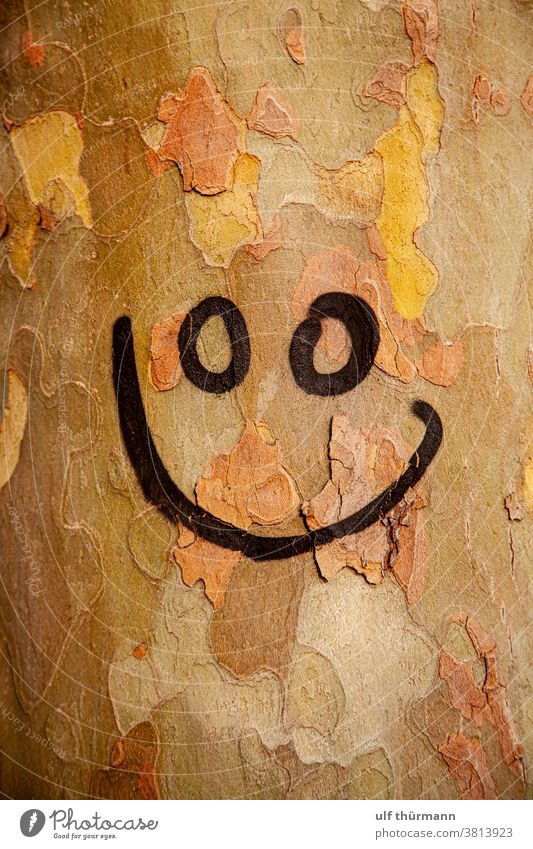 Smiley auf Baumstamm gesprüht Baumrinde Natur Herbst Umwelt braun gelb schwarz Holz Außenaufnahme Detailaufnahme