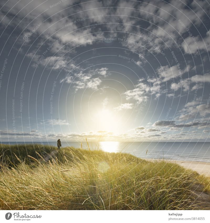 dude in the dunes Dünengras Meer Horizont Aussicht Strand Außenaufnahme Küste Farbfoto Landschaft Natur Himmel Sand Menschenleer Pflanze