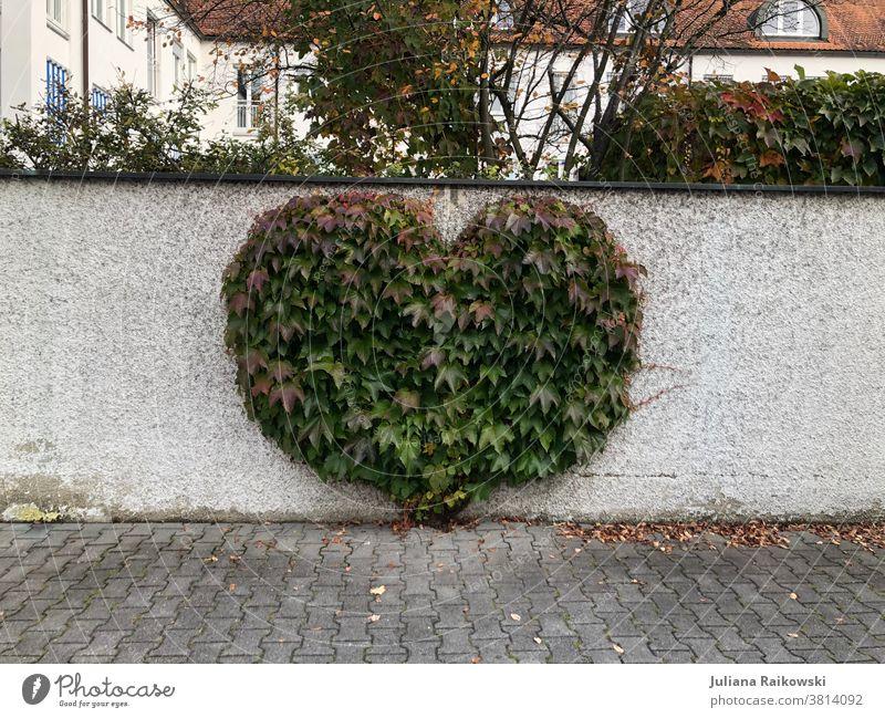Busch in Herzform Herz (Symbol) Liebe Valentinstag Romantik Menschenleer Tag Gefühle Muttertag Zeichen Verliebtheit Farbfoto Außenaufnahme Mauer Natur Kitsch