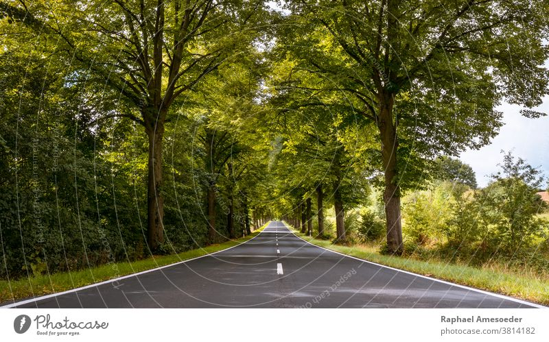 Baumallee durch Thüringen am Sommertag Alameda Gasse bebauter Asphalt Allee schön blau Buchse Schutzdach Umwelt Europa Laubwerk Gras grün Landschaft Fahrspur