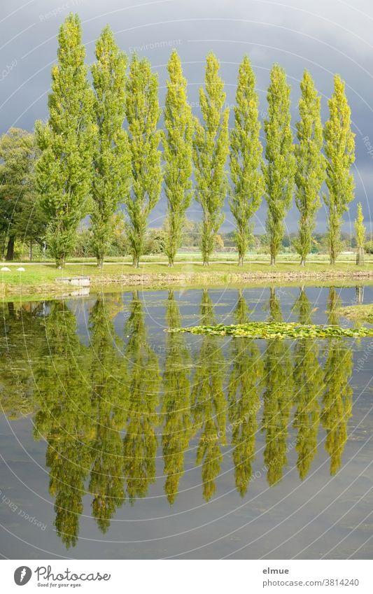 Zehn Pappeln im Sonnenlicht und vor Regenwolken, sich im Wasser eines Sees spiegelnd Baum Spiegelung Seeufer Gewitterstimmung Landschaft Reflexion & Spiegelung