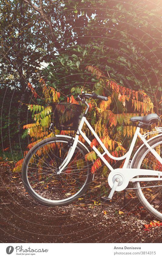 Oldtimer-Fahrrad im Herbstwald Zyklus altehrwürdig Korb stylisch Buchse Frau retro Rad Wald romantisch weiblich niemand England Großbritannien Europa außerhalb
