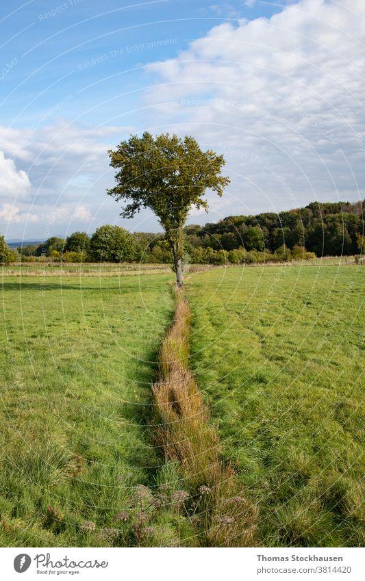 einzelner Baum auf einer Wiese, Wald im Hintergrund Ackerbau Ast hell Cloud Wolken Land Landschaft Tag Umwelt fallen Bauernhof Ackerland Feld frisch Gras