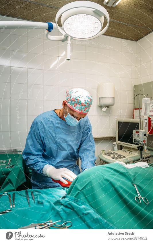 Tierarzt bei der Durchführung eines chirurgischen Eingriffs an einem Hund Veterinär Haustier Chirurg Chirurgie Operation Klinik Krankenhaus Mundschutz geduldig