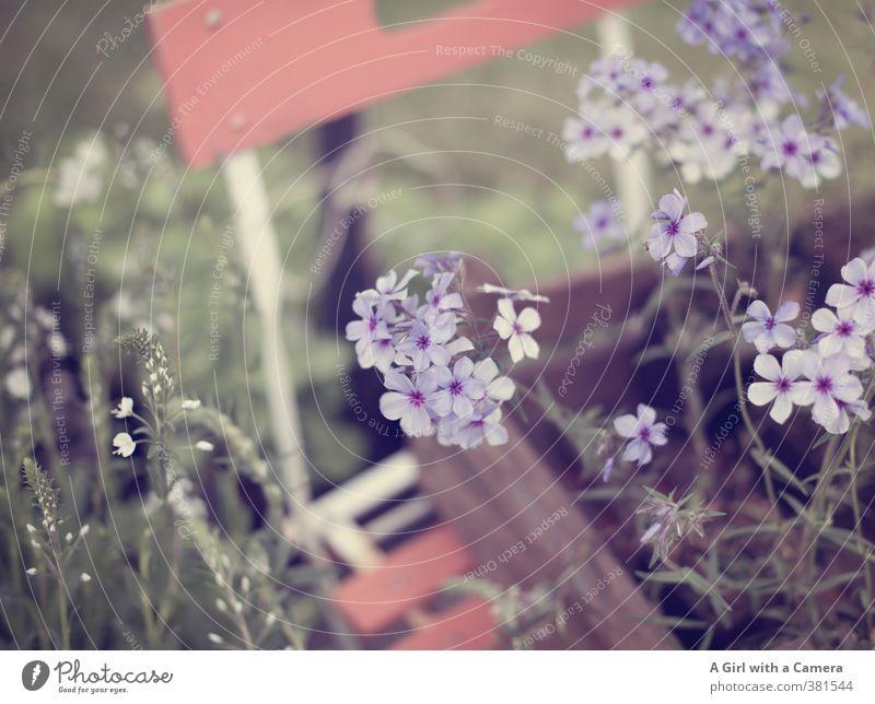 spring in a box Natur Frühling Pflanze Blume Garten Wachstum filigran elegant violett zart Präsentation Gartenstuhl Gedeckte Farben Außenaufnahme Detailaufnahme