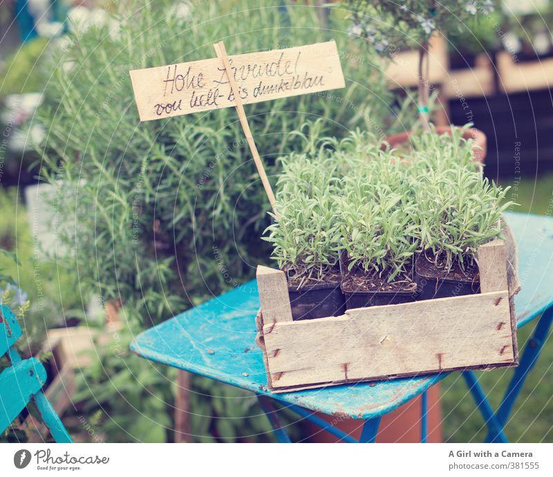..... and in demand Natur Pflanze Frühling Nutzpflanze Wildpflanze Lavendel Kräuter & Gewürze Garten Wachstum frisch Gesundheit Präsentation retro Angebot Markt