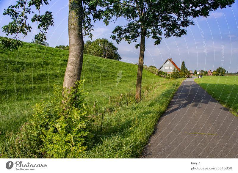 Weg am Deich mit Bäumen am Wegesrand und Häusern am Horizont Wege & Pfade Natur Landschaft Sommer Außenaufnahme Baum Menschenleer Straße Aussicht ruhig grün
