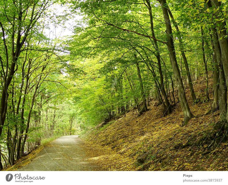 Unterm Blätterdach Waldweg laubbäume Herbstlaub Ziel wandern Naturerlebnis Nationalpark Eifel aktiv erholen Urlaub waldbaden Gesundheit Licht & Schatten hang