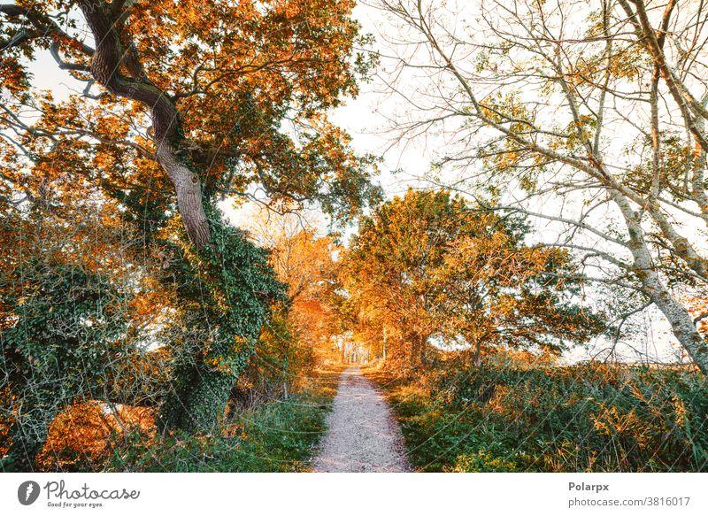 Wanderweg im Herbst, umgeben von bunten Bäumen Ast orange Weg malerisch Farben Licht Sonne Laufsteg Fußweg Jahreszeiten wandern November Waldgebiet Holz Pflanze