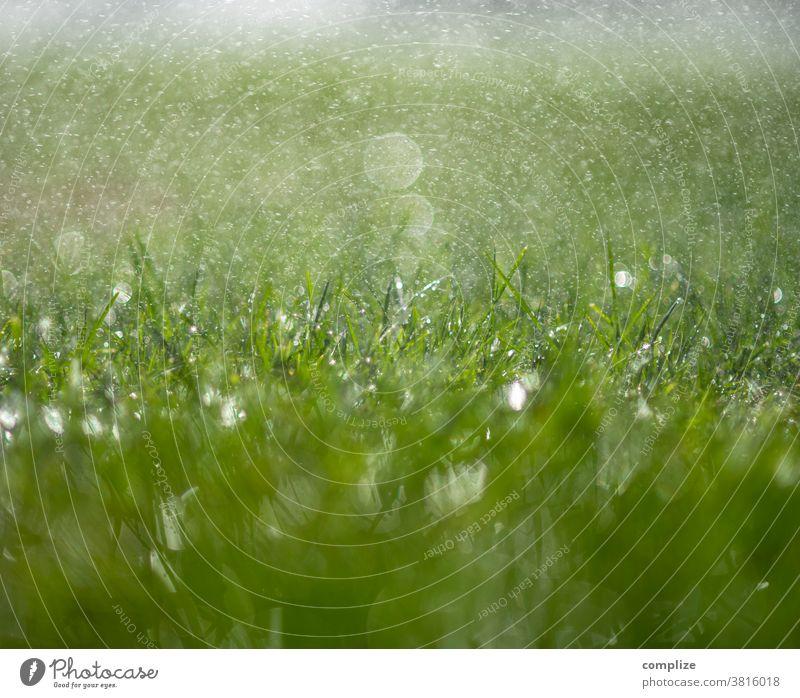Rasensprenger Gras Wiese Wasser Tropfen nass Nässe Wassertropfen Grashalm makro wässern gießen