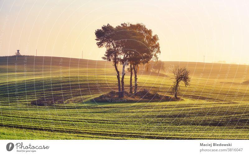 Ländliche Landschaft mit Bäumen in der Mitte eines Feldes bei farbenfrohem Sonnenaufgang. Natur ländlich Sonnenuntergang Baum Himmel schön friedlich Ackerbau