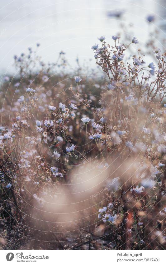 viel von zart Blumen Natur Pflanze Blüte Frühling Farbfoto Blühend Außenaufnahme Sommer Wiese natürlich Menschenleer Schwache Tiefenschärfe Umwelt Tag Unschärfe