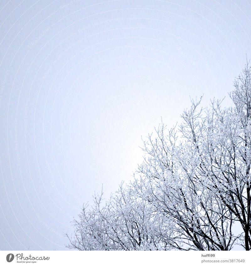 Raureif an Ästen eines Baumes Schneekristall Zweig frieren Eiskristall Ast gefroren weiß kalt Winter eis und schnee Frost Pflanze Nebel schlechtes Wetter nass